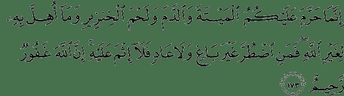 learn quran and seek light